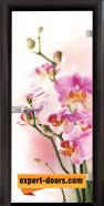 Стъклена интериорна врата Print G 13-2, каса Венге