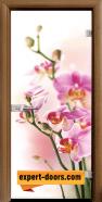 Стъклена интериорна врата Print G 13-2, каса Златен дъб