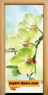 Стъклена интериорна врата Print G 13-3, каса Светъл дъб