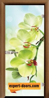 Стъклена интериорна врата Print G 13-3, каса Златен дъб