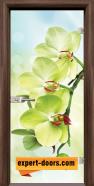 Стъклена интериорна врата Print G 13-3, каса Орех