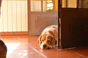 Куче пред врата